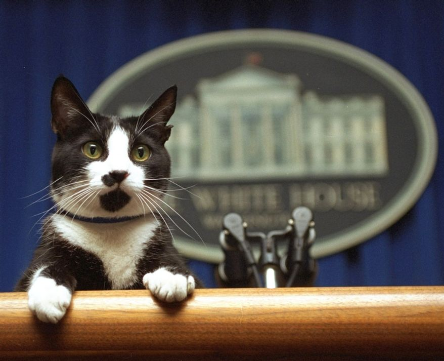 In this March 19, 1994 file photo, Socks the cat peers over the podium in the White House briefing room in Washington.   (AP Photo/Marcy Nighswander, File)