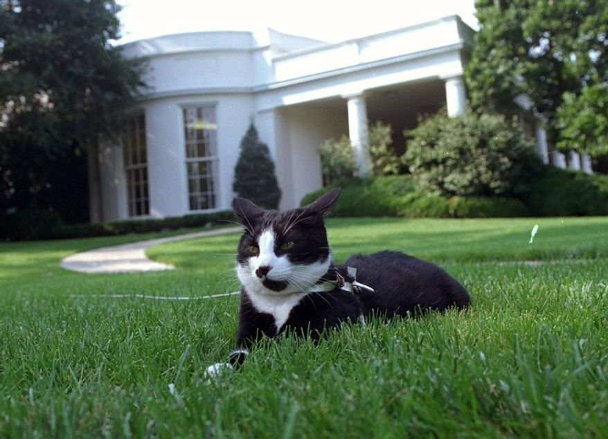 In this Aug. 26, 1994 file photo, first cat Socks rests in the grass outside the Oval Office of the White House in Washington.  (AP Photo/Marcy Nighswander, File)
