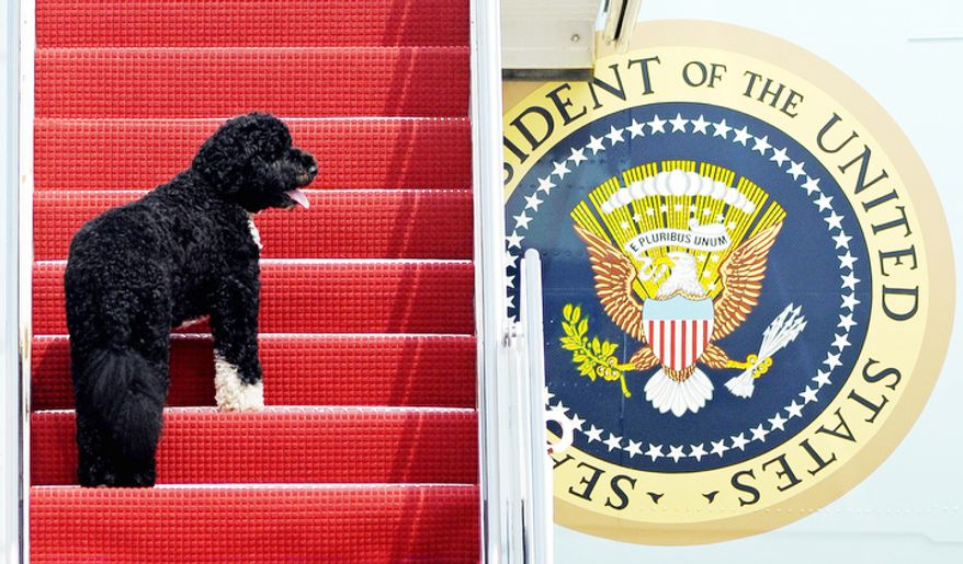 This Aug. 4, 2010 file photo shows presidential pet Bo climbing the stairs of Air Force One at Andrews Air Force Base, Md. for a flight to Chicago with President Barack Obama. Dallas author Jennifer Boswell Pickens interviewed everyone from first family members to White House staffers to give readers a glimpse at what life is like at 1600 Pennsylvania Ave. for pets and what those pets have meant to their famous owners. (AP Photo/Cliff Owen)
