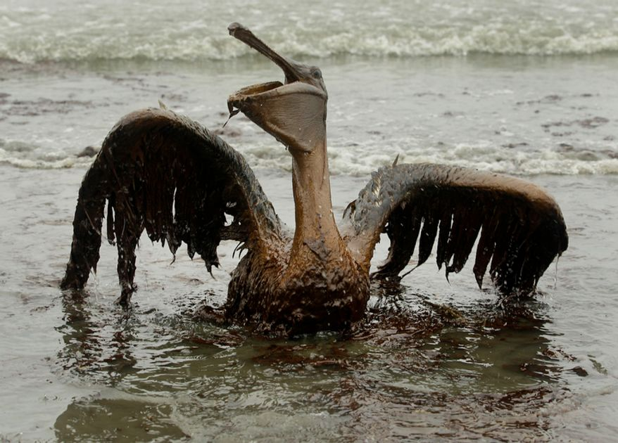 """In this file photo made June 3, 2010, a brown pelican covered in oil sits on the beach at East Grand Terre Island along the Louisiana coast in the wake of the BP Deepwater Horizon rig explosion. Retired Coast Guard Adm. Thad Allen, the federal government's point man on the disaster, said Sunday, Sept. 19, 2010, BP's well """"is effectively dead.""""  A permanent cement plug sealed BP's well nearly 2.5 miles below the sea floor in the Gulf of Mexico, five agonizing months after an explosion sank a drilling rig and led to the worst offshore oil spill in U.S. history. (AP Photo/Charlie Riedel, File)"""