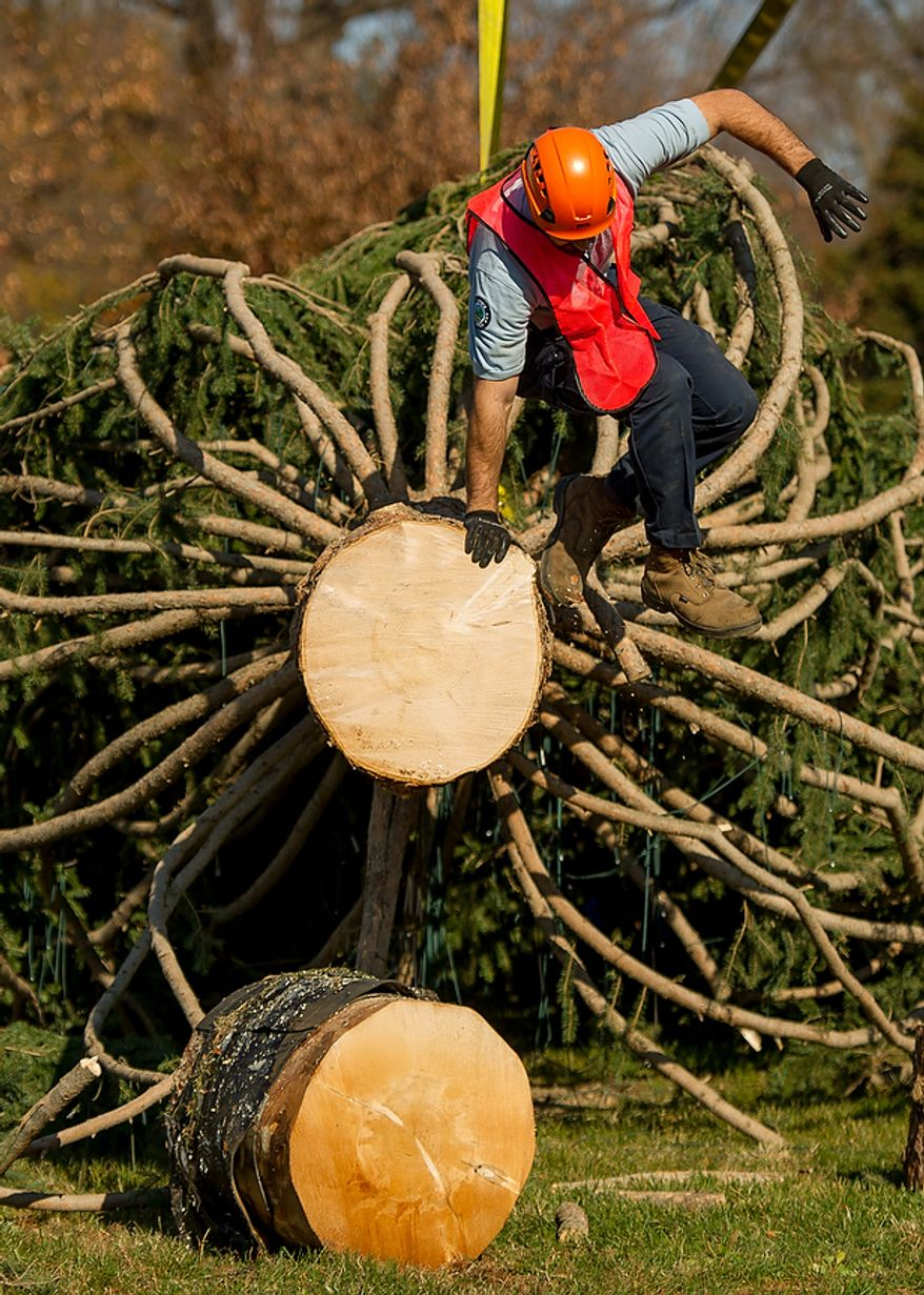 A worker climbs down from the trunk of a 9,000-pound, 74-year-old, 73-foot Engelmann spruce, driven 5,500 miles from White River National Forest in Meeker, Colo., as it is moved into position on the West Lawn of the U.S. Capitol as this year's Capitol Christmas Tree, in Washington on Monday, Nov. 26, 2012. (Andrew Harnik/The Washington Times)