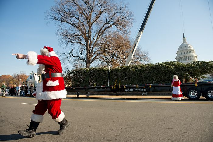 Santa and Mrs. Claus, played by Gerald and Twila Morris, arrive with a 9,000-pound, 74-year-old, 73-foot Engelmann spruce, driven 5,500 miles from White River National Forest in Meeker, Colo., that will be moved into position on the West Lawn of the U.S. Capitol as this year's Capitol Christmas Tree, in Washington on Monday, Nov. 26, 2012. (Andrew Harnik/The Washington Times)