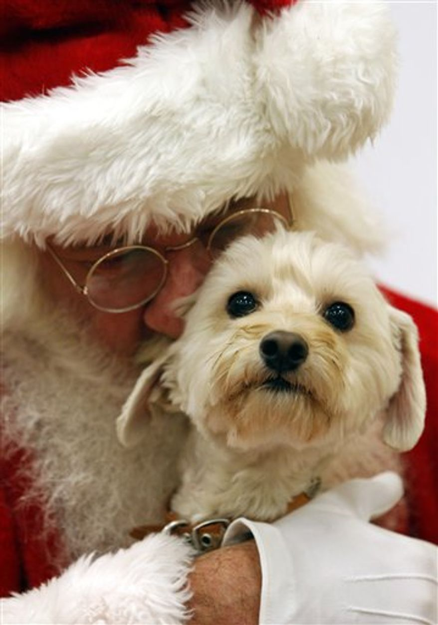 This Dec. 1, 2012 photo provided by PetSmart shows Bentley being held by Santa Claus for a photo at the PetSmart Santa Claws photo event in Fort Worth, Texas. A holiday present for Fido or Fluffy used to be an extra table scrap or a new squeeze toy. But as with gifts for their human counterparts, pet presents are becoming increasingly high-tech. (AP Photo/PetSmart, Richard W. Rodriguez)