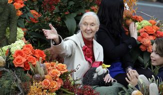 Jane Goodall, famed for her work with chimpanzees in Africa and for her efforts on behalf of endangered species everywhere, serves as grand marshal of the 124th Rose Parade in Pasadena, Calif., on Tuesday, Jan. 1, 2013. (AP Photo/Reed Saxon)