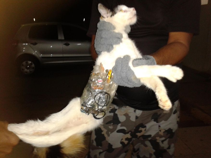 In this photo taken with a cell phone early Monday, Dec. 31, 2012, and released by Brazil's General Superintendency of Prisons of Alagoas (SGAP), guards hold a cat that has items taped to its body at a medium-security prison in Arapiraca, in Alagoas state, Brazil. A prison official says they caught the cat slipping through a prison gate with a cell phone, drills, small saws and other contraband taped to its body. (AP Photo/SGAP)