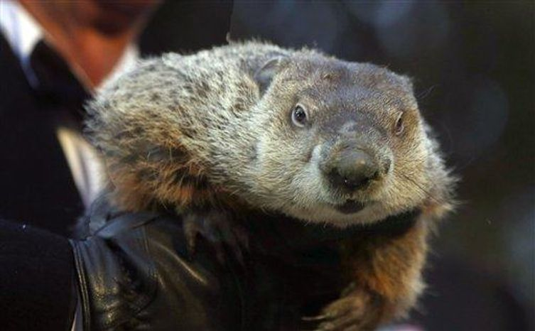 Groundhog Club Co-handler Ron Ploucha holds the weather predicting groundhog, Punxsutawney Phil, after the club said Phil did not see his shadow and there will be an early spring during the Groundhog Day ceremony, Saturday, Feb. 2 in Punxsutawney, Pa. (Associated Press)