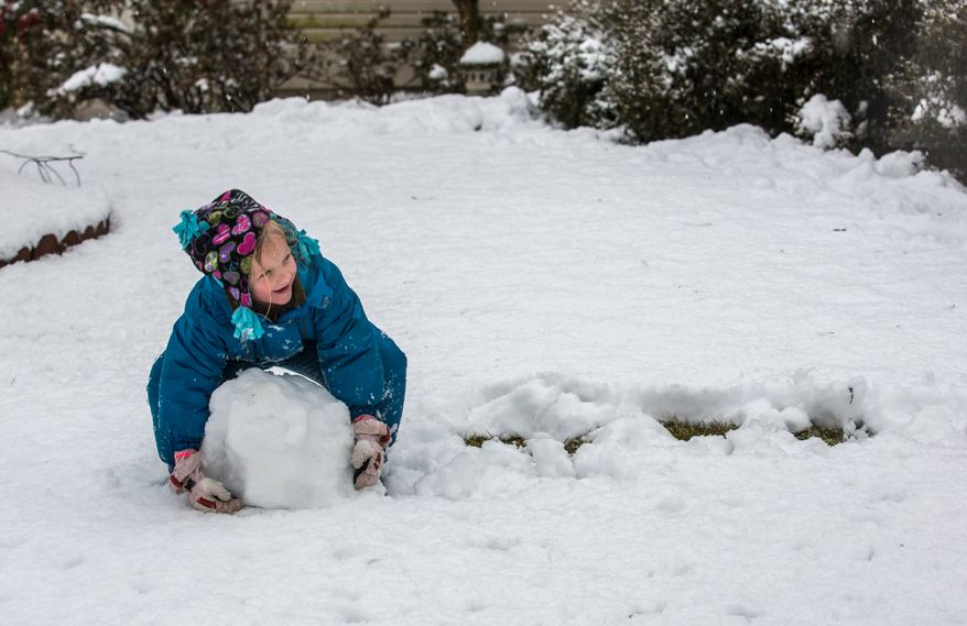 Reily Sweeney, 5, pushes a snowball through the snow while making a snowman in a neighborhood in Fairfax, Va., on March 6, 2013. (Andrew S. Geraci/The Washington Times)