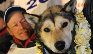 Mitch Seavey became a two-time Iditarod champion when he drove his dog team under the burled arch in Nome on Tuesday evening, March 12, 2013. Leader Taurus looks out at the crowd gathered on Front Street. (Bill Roth/Anchorage Daily News/AP)