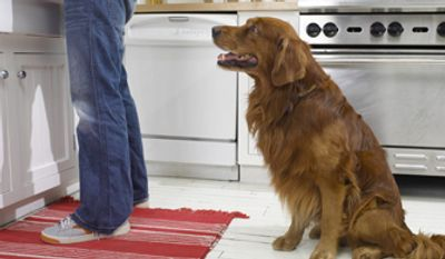 More than half of the nation's dogs are overweight, which comes as a surprise to many well-meaning owners. (image from Dr. Ernie Brown)