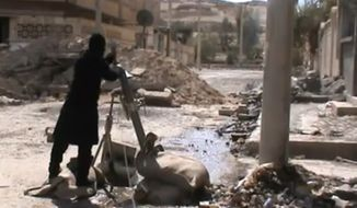 A Free Syrian Army fighter drops a shell into a firing tube in the countryside near Damascus, Syria, on Sunday, March 24, 2013, in this image taken from video obtained from the Ugarit News and authenticated based on its contents and other AP reporting. (AP Photo/Ugarit News via AP video)