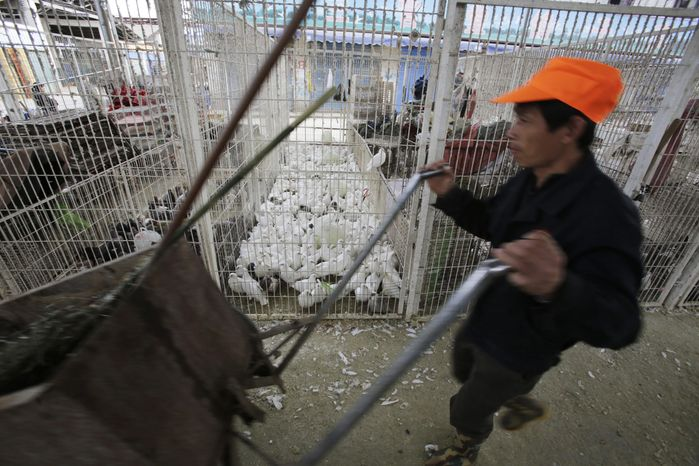 ** FILE ** In this April 3, 2013, photo, a worker pushes a cart as live pigeons are sold at a cage at a poultry wholesale market in Shanghai China. China announced a sixth death from the new bird flu H7N9 strain Friday, while authorities in Shanghai halted the sale of live fowl and slaughtered all poultry at a market where the virus was detected in pigeons being sold for meat. The first cases were announced Sunday. (AP Photo/Eugene Hoshiko)
