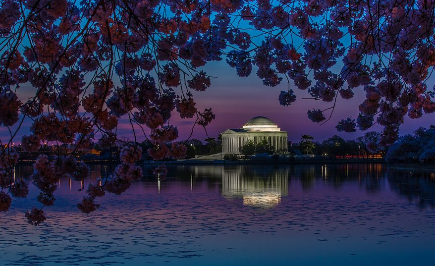 The Jefferson Memorial lights up under the cherry blossoms around the tidal basin bloom, in Washington, DC., Thursday, April 11, 2013. (Andrew S Geraci/The Washington Times)