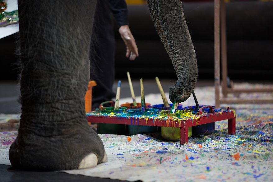 Kelly Anne, a 17 year old Asian elephant, with the Ringling Brothers, uses her trunk to dip her paint brushes into a paint tray, while children who are in the Young Rembrandts, a school art program, paint picture of Kelly Anne, at the George Mason University Patriot Center, in Fairfax, VA., Thursday, April 11, 2013. (Andrew S Geraci/The Washington Times)