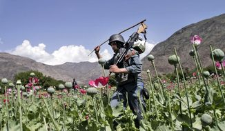 Armed Afghan policemen destroy an opium poppy field in Noorgal, Kunar province, east of Kabul, Afghanistan, on April 13, 2013. (Associated Press)