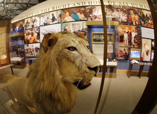 A lion presented to President George W. Bush by Tanzanian President Jakaya Kikwete during Bush's trip to Africa in 2008 is seen on display at the George W. Bush Presidential Center Wednesday,  24, 2013, in Dallas.  More than 8,000 people are expected to attend the invitation-only dedication of the center, Thursday, April 25, which will house the presidential library and museum along with the 43rd presidentís policy institute. It opens to the public on May 1. (AP Photo/David J. Phillip)