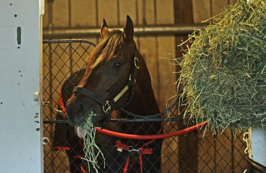 Kentucky Derby winner Orb munches on hay in his stall in Barn 41 at Churchill Downs, Sunday, May 5, 2013, in Louisville, Ky. (AP Photo/Garry Jones)