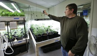 ** FILE ** Mike Steenhout, comptroller of Washington state's Liquor Control Board, takes photos as he tours a marijuana growing facility in Seattle on Thursday, April 4, 2013. (AP Photo/Elaine Thompson)