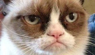 "** FILE ** ""Grumpy Cat"" (Image: Youtube)"