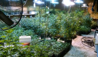 ** FILE ** This May 20, 2013, photo provided by the Drug Enforcement Administration (DEA) Strike Force shows some of the marijuana plants the agency says were grown by a woman from a wealthy New York suburb in a warehouse in the Queens borough of New York. (AP Photo/DEA Strike Force)