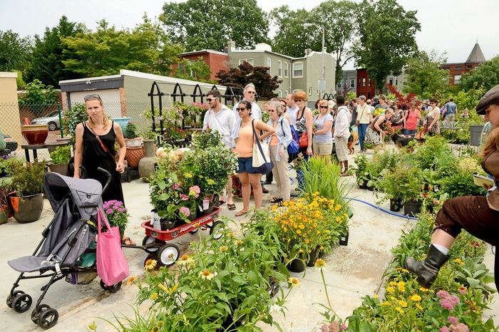 "Customers line up Sunday to buy plants, flowers, pots and other ""survivors"" at a Frager's Hardware pop-up store at Eastern Market. (Andrew Harnik/The Washington Times)"