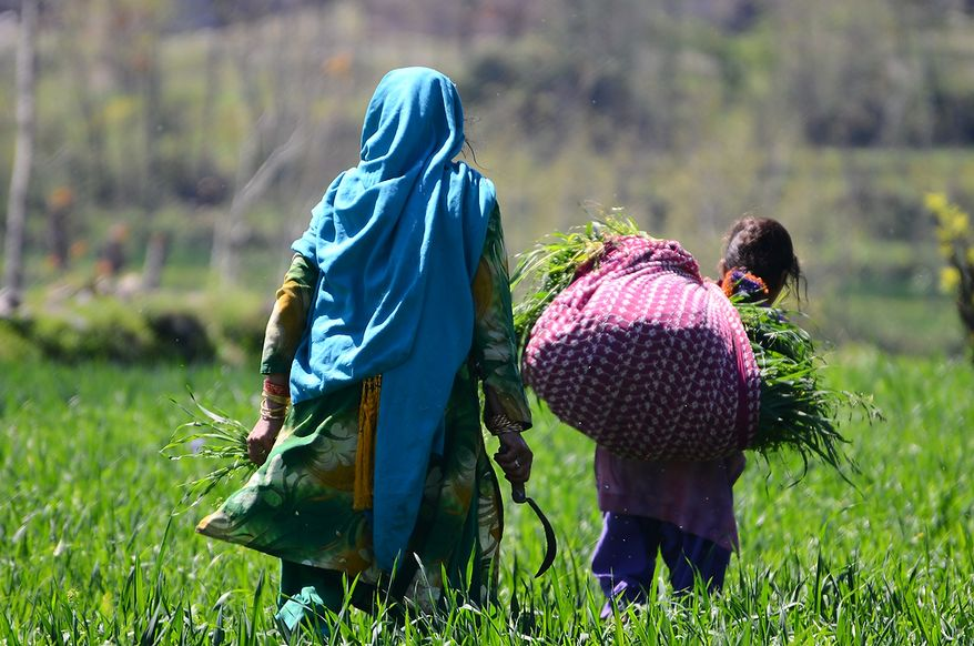 A mother and daughter work in the fields at a village in the Swat valley. The mother cuts grass, and the 10-year-old daughter carries it for their cattle to eat. This is part of their daily work. Photo /  Irfan Ali
