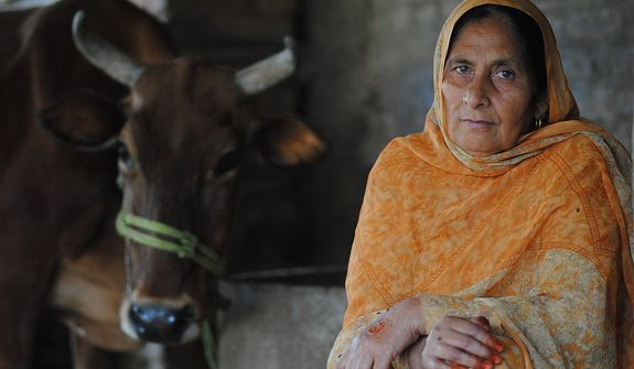 Jahan Zeba is a 53-year old unmarried woman living in Mardan, Khyber Pakhtunkhwa. She refused to marry a man chosen by her family Arranged marriages are a tradition in Pakistan, where the family chooses a suitable match for their daughter. Jahan chose to live an independent life. Her income depends on the two cows she owns. Photo / Seema Gul