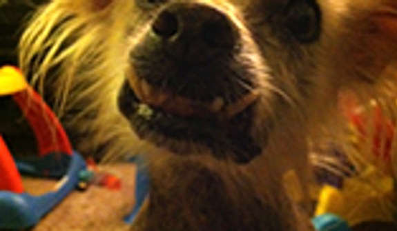 Creature is a 14 year old Mexican Hairless mix. (Credit: World's Ugliest Dog Competition)