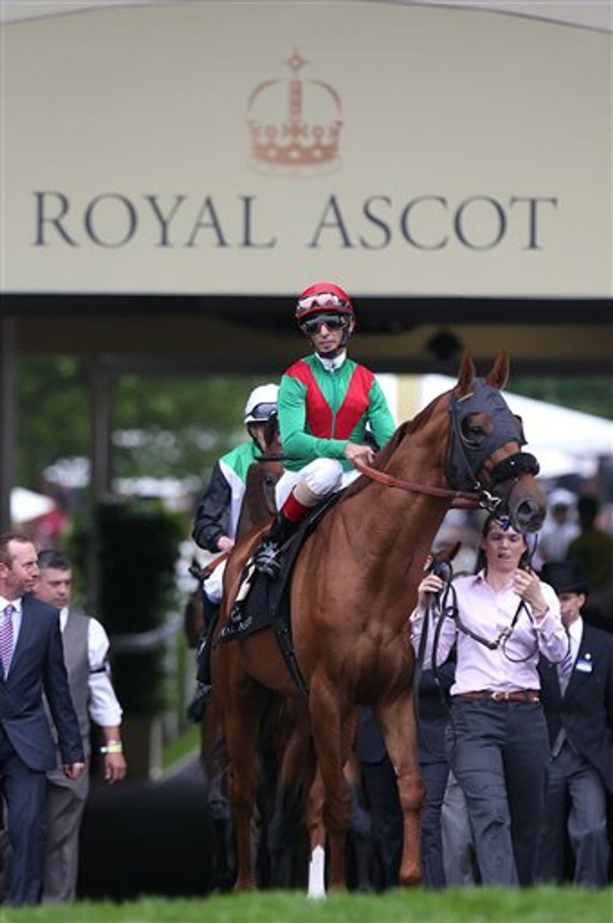 Animal Kingdom ridden by John R. Velazquez walks in the parade ring before running in the Queen Anne Stakes during day one of the Royal Ascot meeting at Ascot Racecourse, England, Tuesday June 18, 2013. Animal Kingdom finished well down the field in the race. (AP Photo/PA, Steve Parsons)
