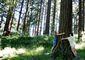 Tree Hugging_Lea.jpg