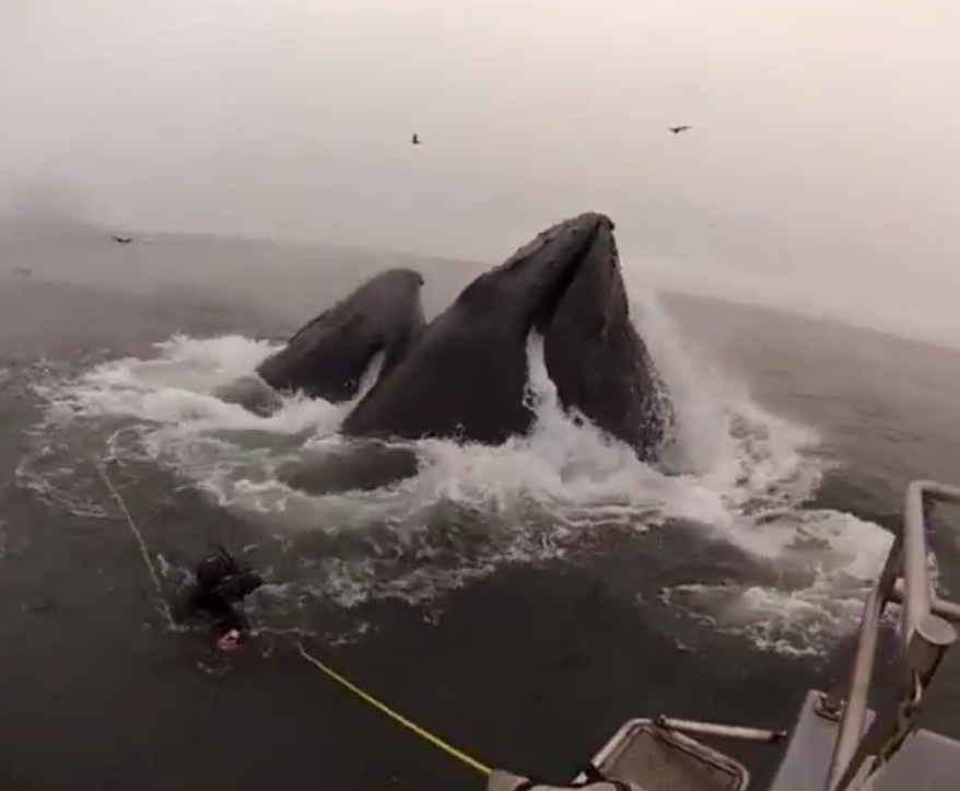 Divers are nearly devoured by whales in this YouTube screenshot