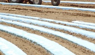 **FILE** A farm worker prepares a tomato field for planting at K&D Farmers near Oneonta, Ala., on May 10, 2012. (Associated Press)