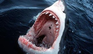 """**FILE** The movie """"Jaws"""" struck a nerve with the American psyche. But the odds of being attacked by a shark are 1 in 11.5 million."""