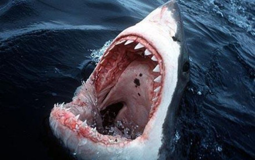 "**FILE** The movie ""Jaws"" struck a nerve with the American psyche. But the odds of being attacked by a shark are 1 in 11.5 million."