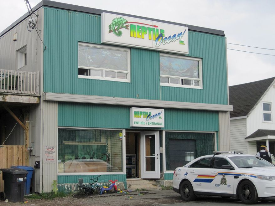In this Monday Aug. 5, 2013, photo, Royal Canadian Mounted Police work at the scene of a fatal python attack at Reptile Ocean exotic pet store in Campbellton, New Brunswick. Two young boys were killed by a python snake as they slept in an apartment above the store. (AP Photo/The Canadian Press)