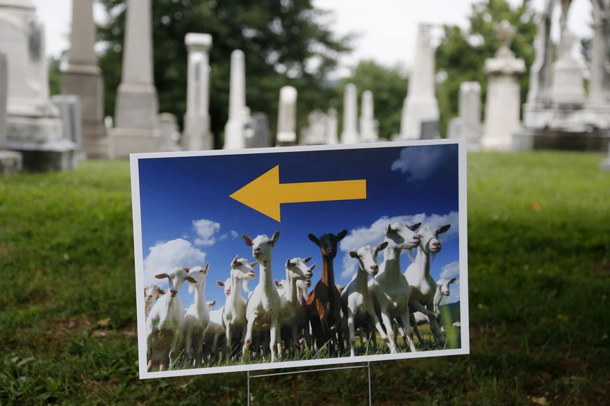 """A photograph of goats on a lawn sign directs reporters to where goats will be released at Congressional Cemetery in Washington, Wednesday, Aug. 7, 2013. More than 100 goats will be taking over Washington's Historic Congressional Cemetery to help clean up brush in an area away from the graves. The goats will graze 24 hours a day for six days to eliminate vines, poison ivy and weeds, while also """"fertilizing the ground."""" (AP Photo/Charles Dharapak)"""