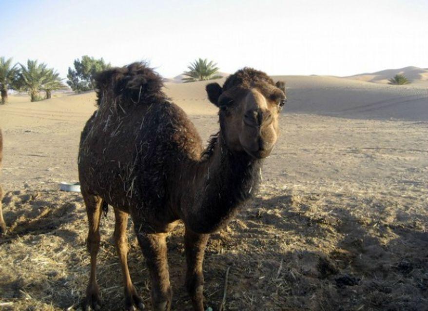 ** FILE ** Merzouga, Morocco. (Associated Press)