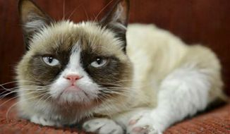 "It probably won't affect her famous mood, but Grumpy Cat now has an endorsement deal. The St. Louis-based company announced Tuesday, Sept. 17, 2013, the frown-faced Internet sensation, real name Tardar Sauce, is now the ""spokescat"" for a Friskies brand of cat food. (AP Photo/Nestle Purina PetCare)"