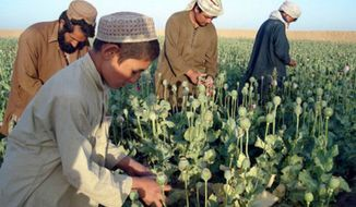** FILE ** An opium field in Afghanistan. (Associated Press)