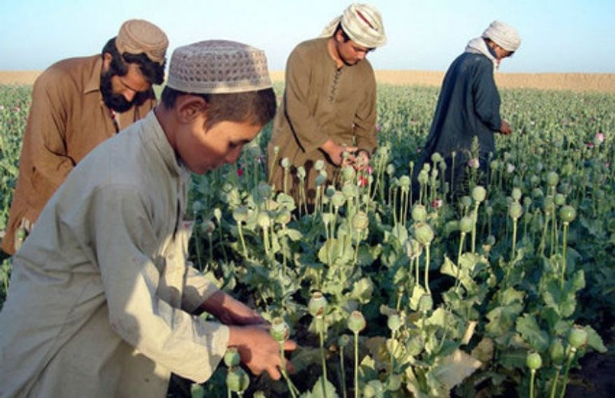 ** FILE ** An opium field in Afghanistan. (Associated Press)