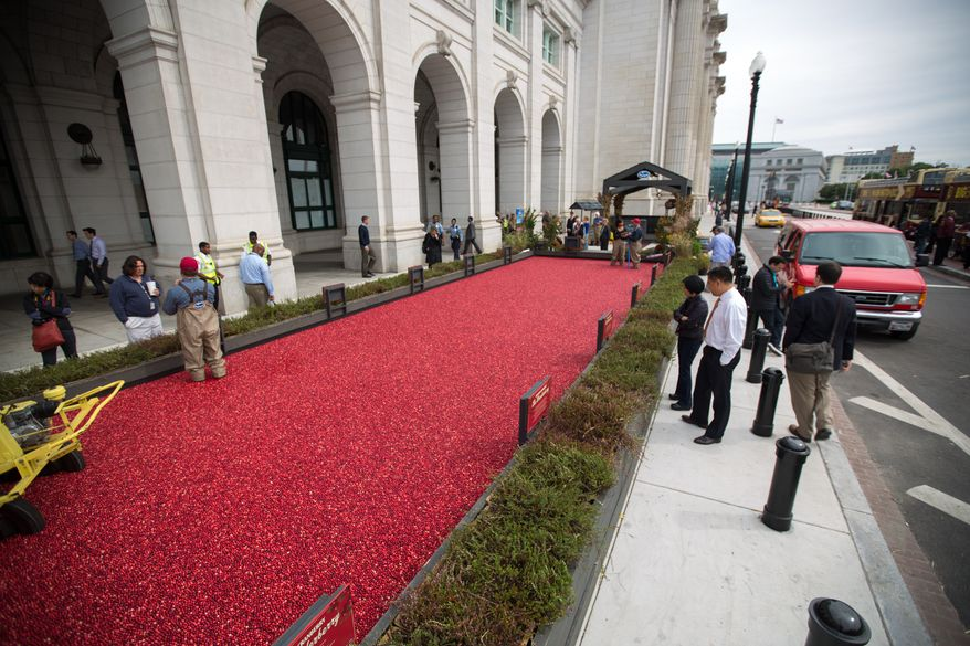 Tourists and residents gather around a large cranberry bog outside of Union Station, to view an informational exhibit on cranberries, presented by Ocean Spray,  in Washington, DC., Tuesday, October 8, 2013.  (Andrew S Geraci/The Washington Times)