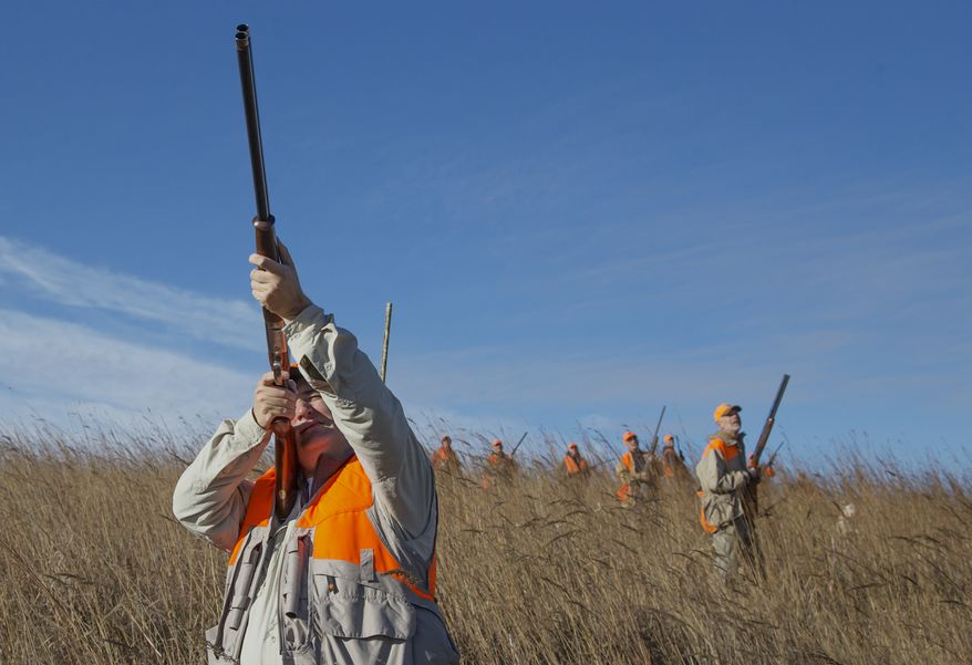 Sen. Ted Cruz, R-Texas, shoots at a pheasant during a hunt hosted by Rep. Steve King R-Iowa, on Saturday, Oct. 26, 2013, in Akron, Iowa. Cruz attended the Iowa GOP's annual fundraising dinner in Des Moines on Friday. (AP Photo/Nati Harnik)