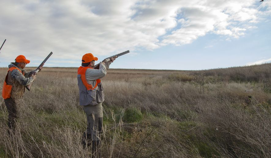 Sen. Ted Cruz, R-Texas, shoots at a pheasant during a hunt hosted by Rep. Steve King, R-Iowa, on Saturday, Oct. 26, 2013, in Akron, Iowa. Cruz attended the Iowa GOP's annual fundraising dinner in Des Moines, Iowa, on Friday. (AP Photo/Nati Harnik)