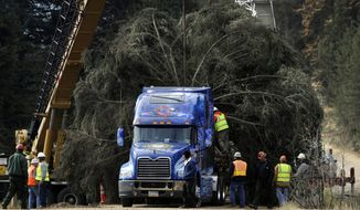 ** FILE ** The 2013 U.S. Capitol Christmas tree is lowered onto a semi-truck in the Colville National Forest in Usk, Wash., on Friday, Nov. 1, 2013. (AP Photo/The Spokesman-Review, Kathy Plonka)