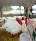 11242013_turkeys8201.jpg