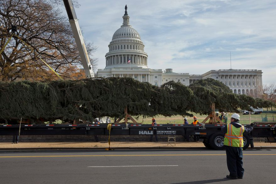 The 2013 Capitol Christmas Tree, an 88-foot-tall Engelmann spruce from Colville National Forest in Washington state, arrives Monday on Capitol Hill ready to be adorned with more than 5,000 homemade ornaments before it is lit Dec. 3. (Associated Press)