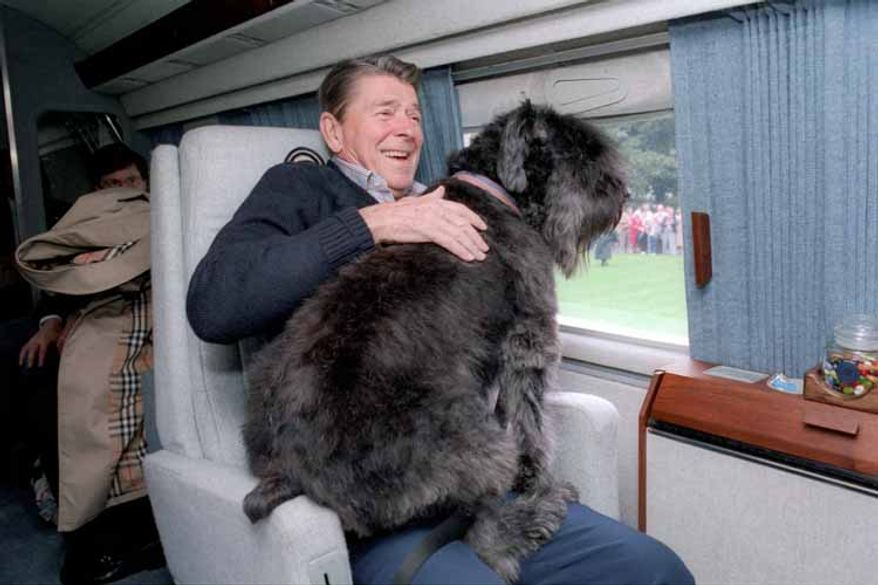 President Ronald Reagan's dog Lucky wanted a better seat with a view.
