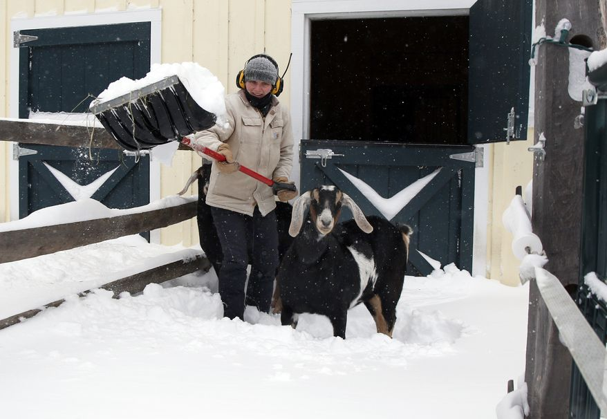 Brooke Dolan clears snow outside her barn in Boxford, Mass. as her goat, Oreo, watches on Friday, Jan. 3, 2014. A winter storm that dropped nearly 2 feet of snow just north of Boston, temporarily shut down major highways in New York and Pennsylvania and forced airlines to cancel thousands of flights nationwide menaced the Northeast on Friday with howling winds and dangerously cold temperatures. (AP Photo/Elise Amendola)