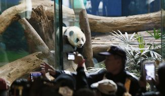 Security guards hold back crowds viewing Taiwan's 6-month-old panda cub Yuan Zai during her first public display at the Taipei Zoo in Taipei, Taiwan, Monday, Jan. 6, 2014. (AP Photo/Wally Santana)