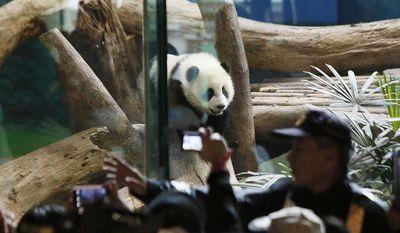 Security guards hold back crowds viewing Taiwan's 6-month-old panda cub Yuan Zai during her first public display at the Taipei Zoo in Taipei, Taiwan, Monday, Jan. 6, 2014. (AP Photo/Wally Santana)