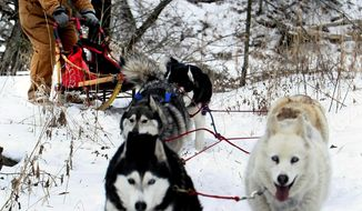 ADVANCE FOR MONDAY JAN. 20 - In this Jan. 9, 2014 photo, Tom Kryzer guides his five sled dogs around a bend in woods near his land near Mantorville, Minn. He loves this time of the year when he can let his dogs run and he can go along for the scenery and the ride. (AP Photo/Rochester Post-Bulletin, John Weiss)